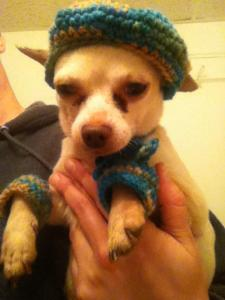 Dog Hat, Scarf and Leg Warmers