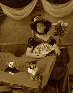 Parlor scene.  Proper lady with 2 chihuahuas.